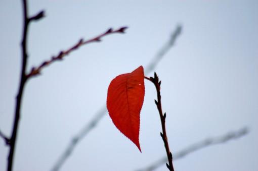 Останній листок